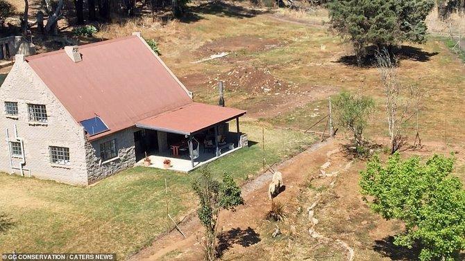 Lion House, Penginapan Yang Dikelilingi Oleh 77 Ekor Singa Dewasa